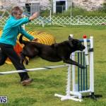 Dog Agility Trials Bermuda, March 28 2015-97