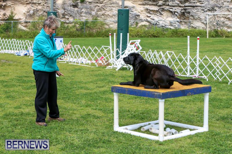 Dog-Agility-Trials-Bermuda-March-28-2015-98