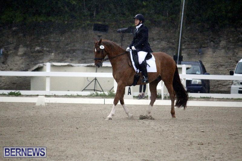 equestrian-6mar2015-14