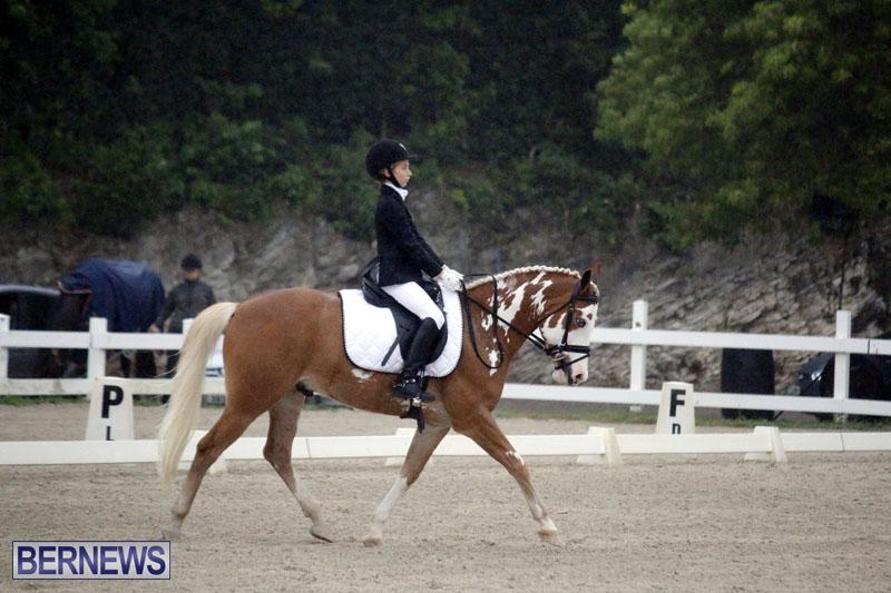 equestrian-6mar2015-2