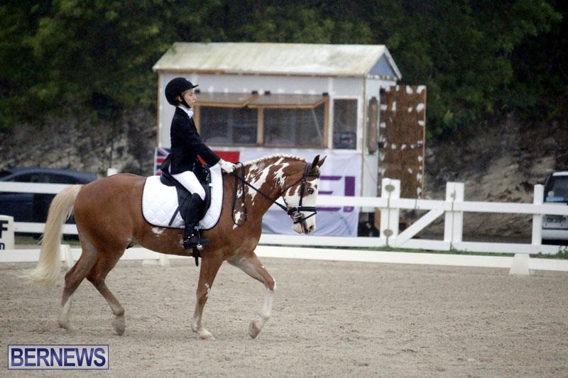 equestrian-6mar2015-3