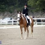 equestrian 6mar2015 (5)