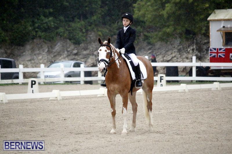 equestrian-6mar2015-5
