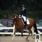 equestrian 6mar2015 (8)
