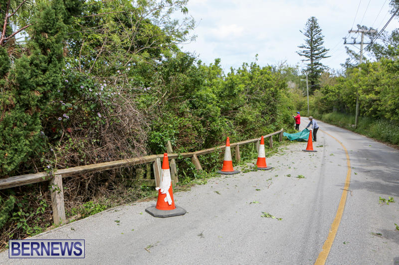 St Davids Road Trees Bermuda, April 29 2015-1