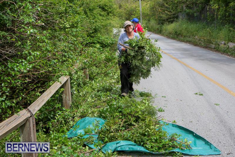 St Davids Road Trees Bermuda, April 29 2015-2