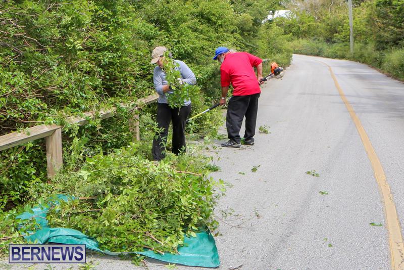 St Davids Road Trees Bermuda, April 29 2015-3
