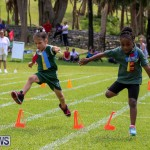 Devonshire Preschool Sports Bermuda, May 22 2015-214