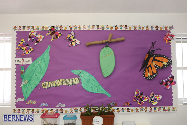 Little-Learners-AG-Show-2015-77