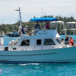 fitted-dingy-races-st-george-may-2015-18