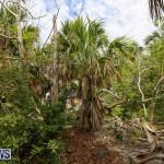 Trunk Island Bermuda, June 16 2015-11