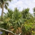 Trunk Island Bermuda, June 16 2015-12