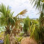 Trunk Island Bermuda, June 16 2015-17
