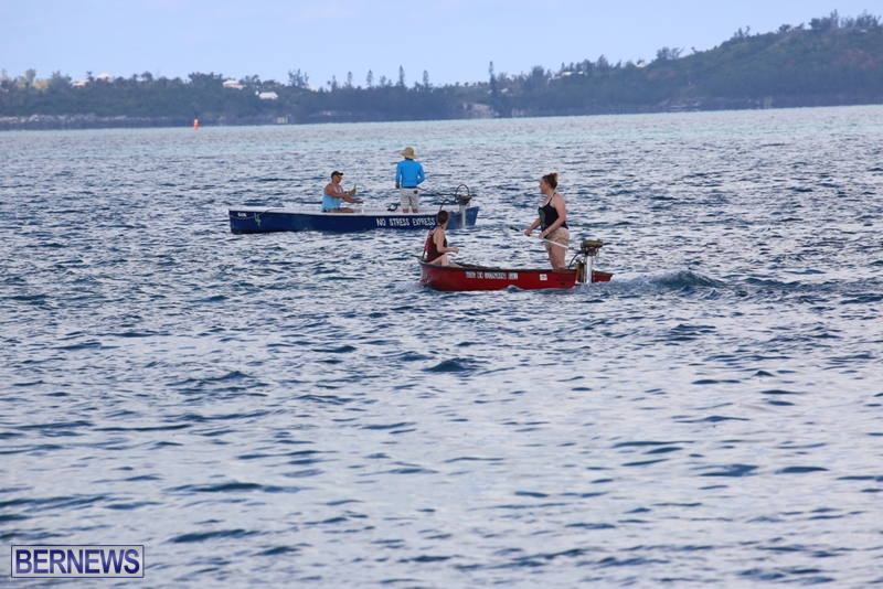seagull-race-bermuda-june-2015-8