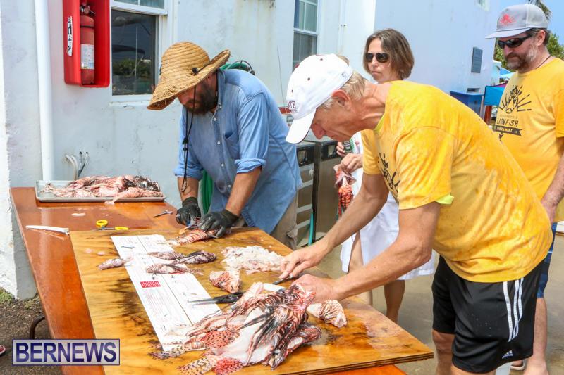 Groundswell-Lionfish-Tournament-Bermuda-July-18-2015-16