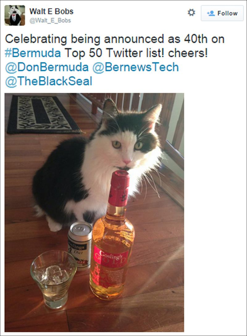 bermuda cat tweets july 2015 (1)