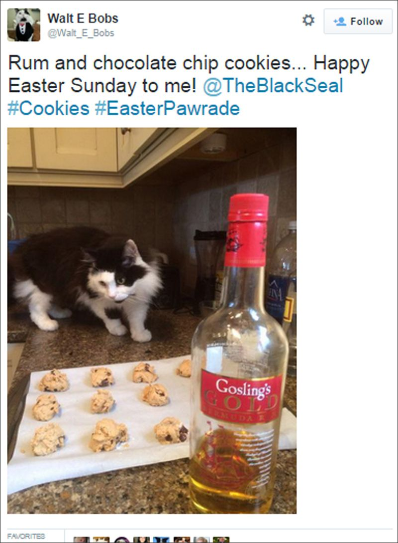 bermuda cat tweets july 2015 (3)