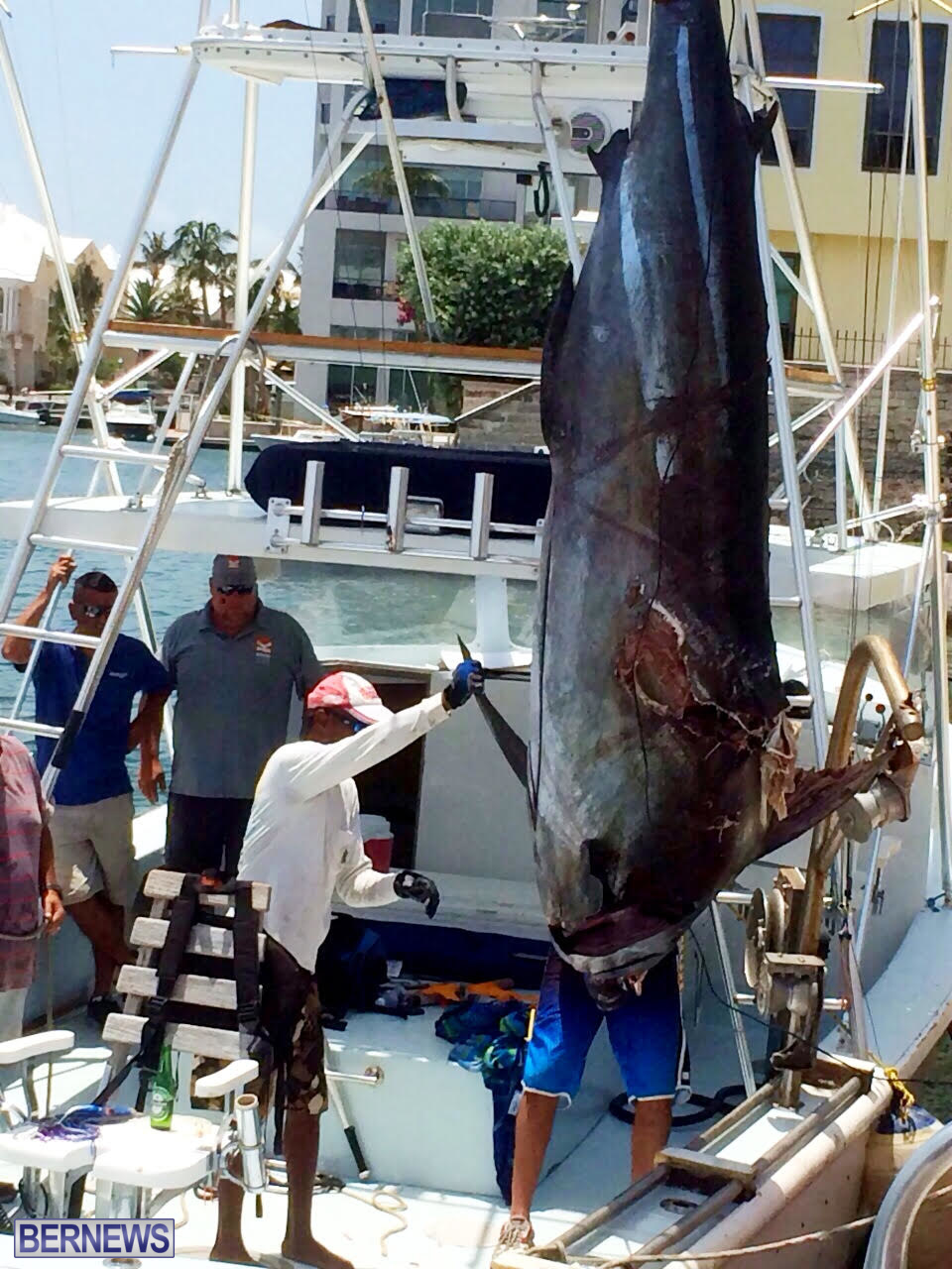 large marlin bermuda july 2015 (1)