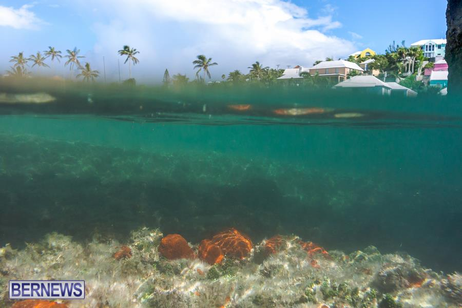520 Underwater Bermuda generic September 2015