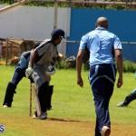 Cricket Bermuda September 8 2015 (1)