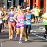 Running of the Bulls Bermuda September 2015 (14)