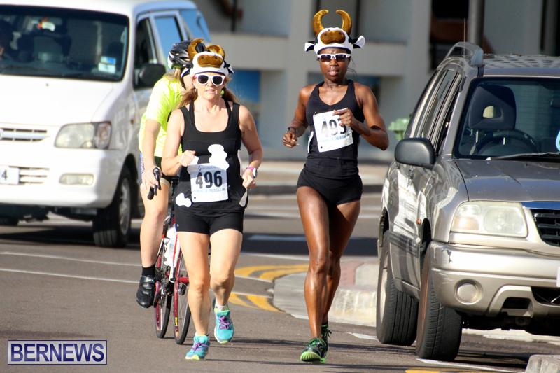 Running-of-the-Bulls-Bermuda-September-2015-18