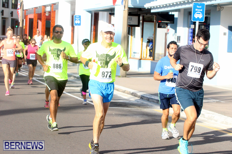 Running-of-the-Bulls-Bermuda-September-2015-5