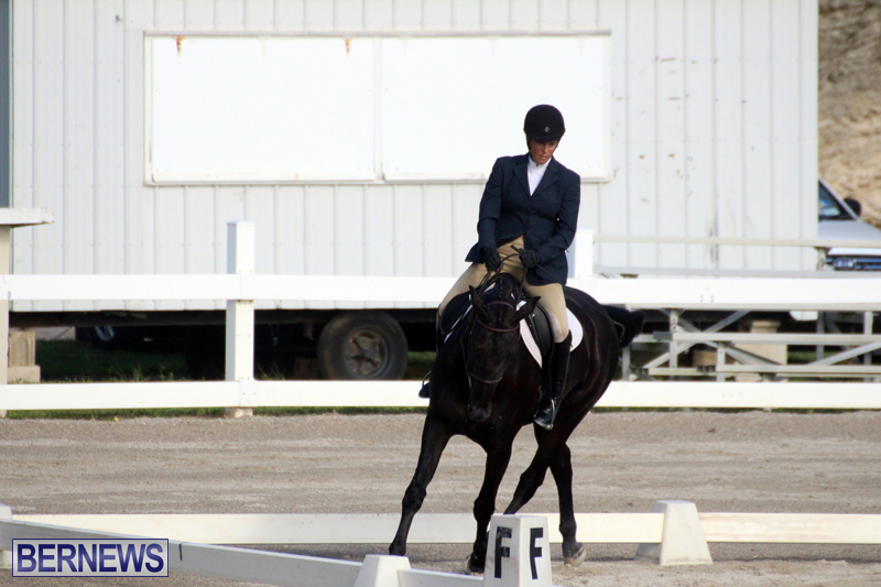 Bermuda-Dressage-Show-October-3-2015-13