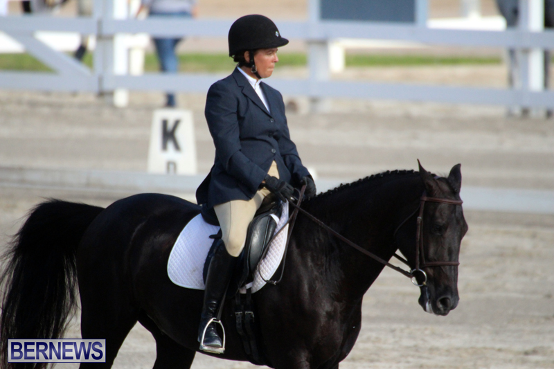 Bermuda-Dressage-Show-October-3-2015-16