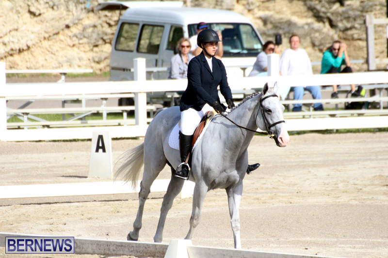 Bermuda-Dressage-Show-October-3-2015-18