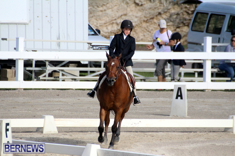 Bermuda-Dressage-Show-October-3-2015-4