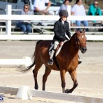Bermuda Dressage Show October 3 2015 (5)