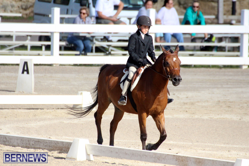 Bermuda-Dressage-Show-October-3-2015-5