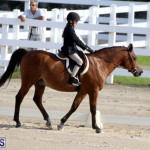Bermuda Dressage Show October 3 2015 (6)