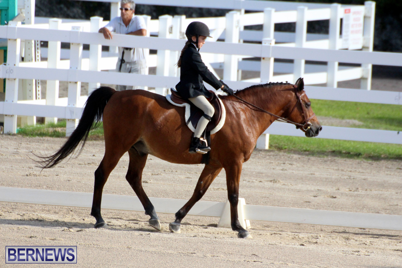 Bermuda-Dressage-Show-October-3-2015-6