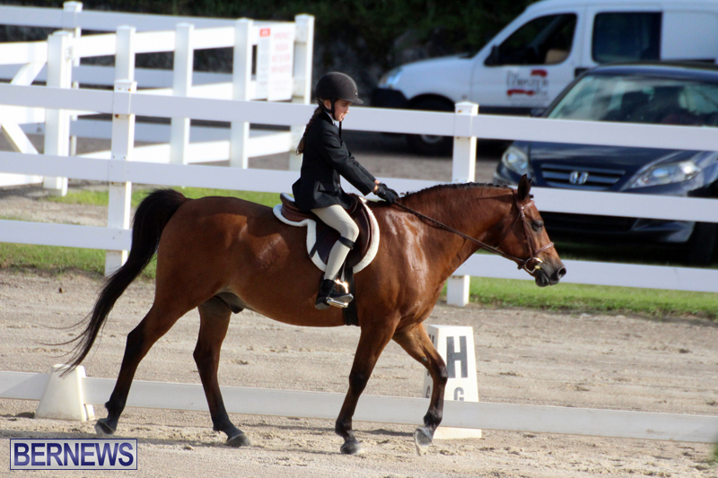 Bermuda-Dressage-Show-October-3-2015-7