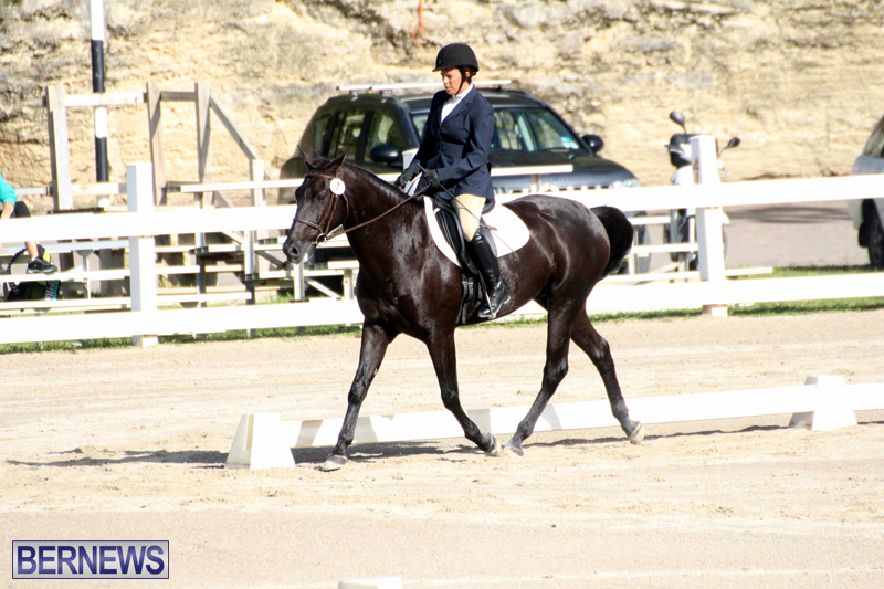 Bermuda-Dressage-Show-October-3-2015-8