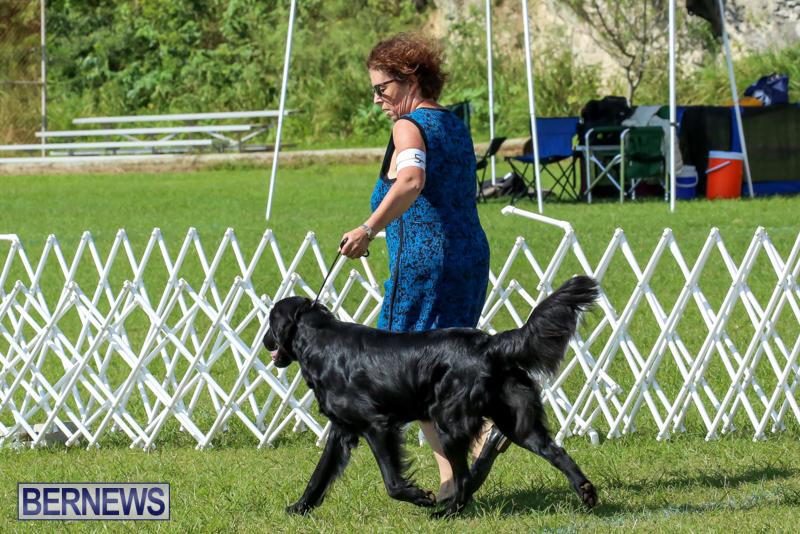 Dog-Show-Bermuda-October-24-2015-1