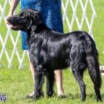 Dog Show Bermuda, October 24 2015-11