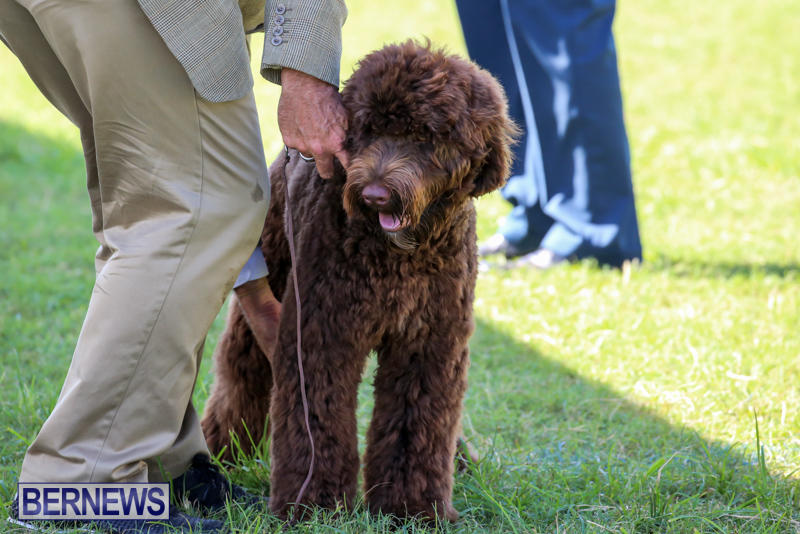 Dog-Show-Bermuda-October-24-2015-12