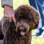 Dog Show Bermuda, October 24 2015-13