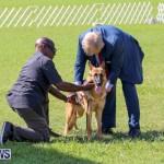 Dog Show Bermuda, October 24 2015-18