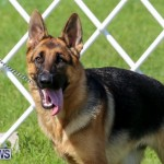 Dog Show Bermuda, October 24 2015-20
