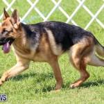 Dog Show Bermuda, October 24 2015-21