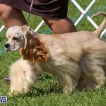 Dog Show Bermuda, October 24 2015-29