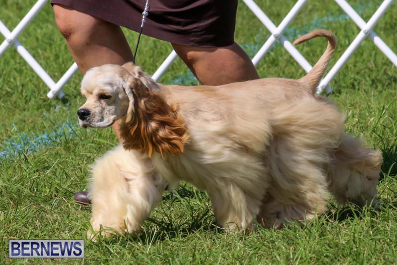 Dog-Show-Bermuda-October-24-2015-29