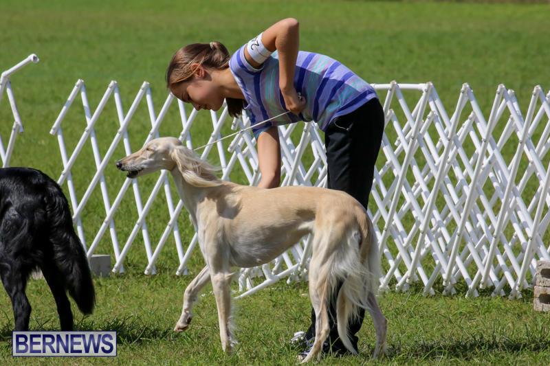 Dog-Show-Bermuda-October-24-2015-3