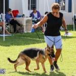 Dog Show Bermuda, October 24 2015-32