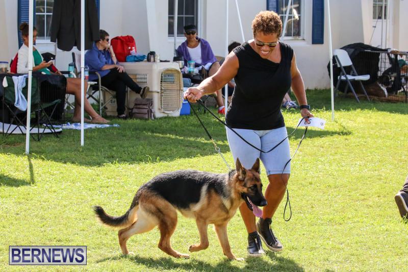 Dog-Show-Bermuda-October-24-2015-32
