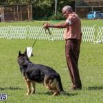 Dog Show Bermuda, October 24 2015-36